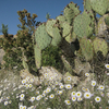 Spring At Tonto National Forest