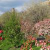 Springtime In Riverside Park