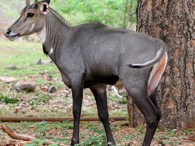 Sri Narasimhaswamy Wildlife