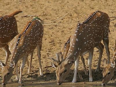 Sri Penusila Narasimhaswamy Wildlife Sanctuary