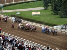 Stampede Chuckwagon Racing