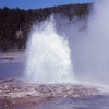 Steady Geyser - Yellowstone - USA