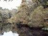 Steinhatchee River
