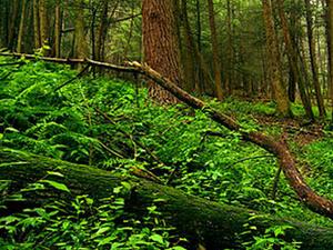 Stokes Forestal del Estado