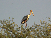 Bharatpur Holiday Package