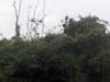 Stork Island