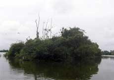Cigüeña Isla