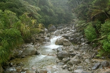 Stream @ Kahurangi National Park NZ