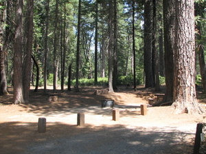 Meadows Campground Stumpy