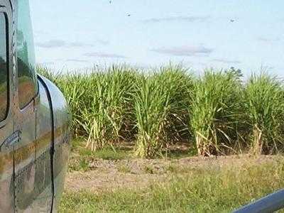 Sugarcane Cultivation  Alto  Paraguay