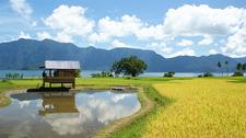 Sumatra Padang Paddy Field