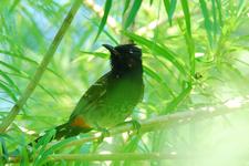 Sundarbans Avian Fauna