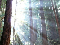 Muir Woods National Monument