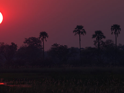 Sunset  Okavango Delta
