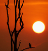 Sunset On The Kabini