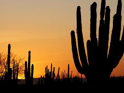 Sunset Over The Desert In Sonora