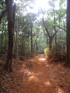 Sunset Point Trail Through Woods- Matheran - Maharashtra - India
