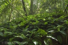 Surrounding Forest Vegetation