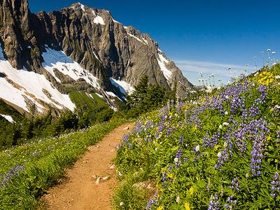Swiftcurrent Pass Trail Views - Glacier - Montana - USA