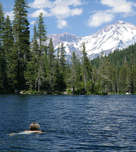 Swimmer With Mount Shasta