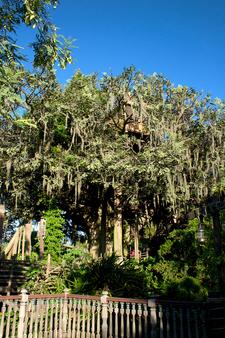 Swiss Family Robinson Treehouse