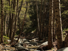 Switzer Park Picnic Area