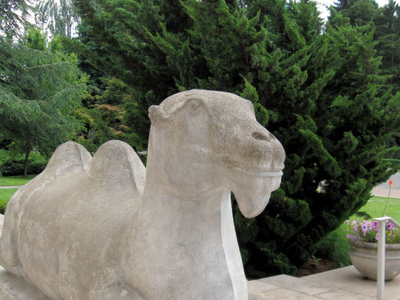 Camel Statue Of Seattle Asian Art Museum