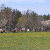 Saaremaa Countryside