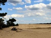 Hoge Veluwe National Park