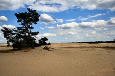 De Hoge Veluwe National Park