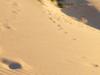 Sand Dunes Sutherland Shire