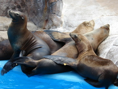 Basking Sea Lions In Park