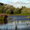 Sheltered Lagoon At The London Wetland Centre