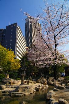 Fuji-An Garden
