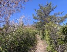 The Snake Den Ridge Trail