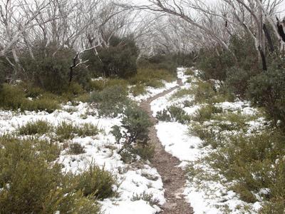 Bungalow Spur Track Near Federation Hut