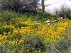 Spring Wildflowers In SDNM