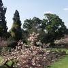 The Rose Garden In The Johannesburg Botanical Garden