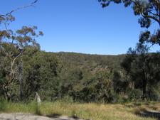 Red Stringy Bark Woodland