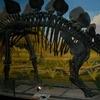 Stegosaurus Dino Mcanb