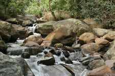 Stream Of Uluguru Mountains