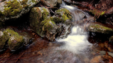 A Stream Flowing Through Hosmer's Grove