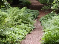 San Francisco Botanical Garden