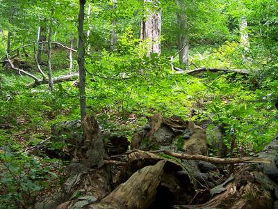Forest In Stuzica