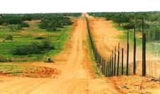 Dingo Fence- Cameron Corner