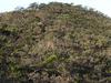Summit Of Mount Tambuyukon