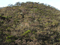 Monte Tambuyukon