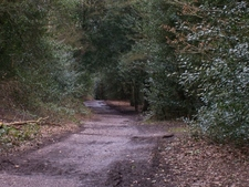 Sutton Park Path