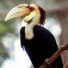 Tabin Wildlife Reserve - Exotic Birdlife