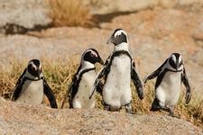 Table Mountain National Park - Boulders SA